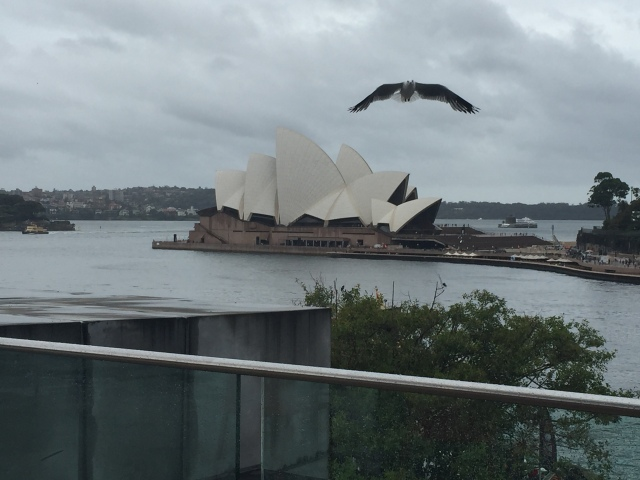 Sydney Opera House and Seagull